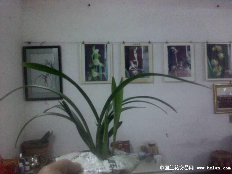 点击图片在新窗口浏览原图