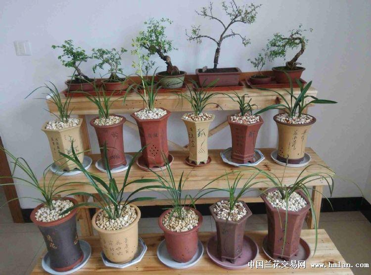 自制花架-养兰环境-中国社区交易网图纸页兰花第一图片