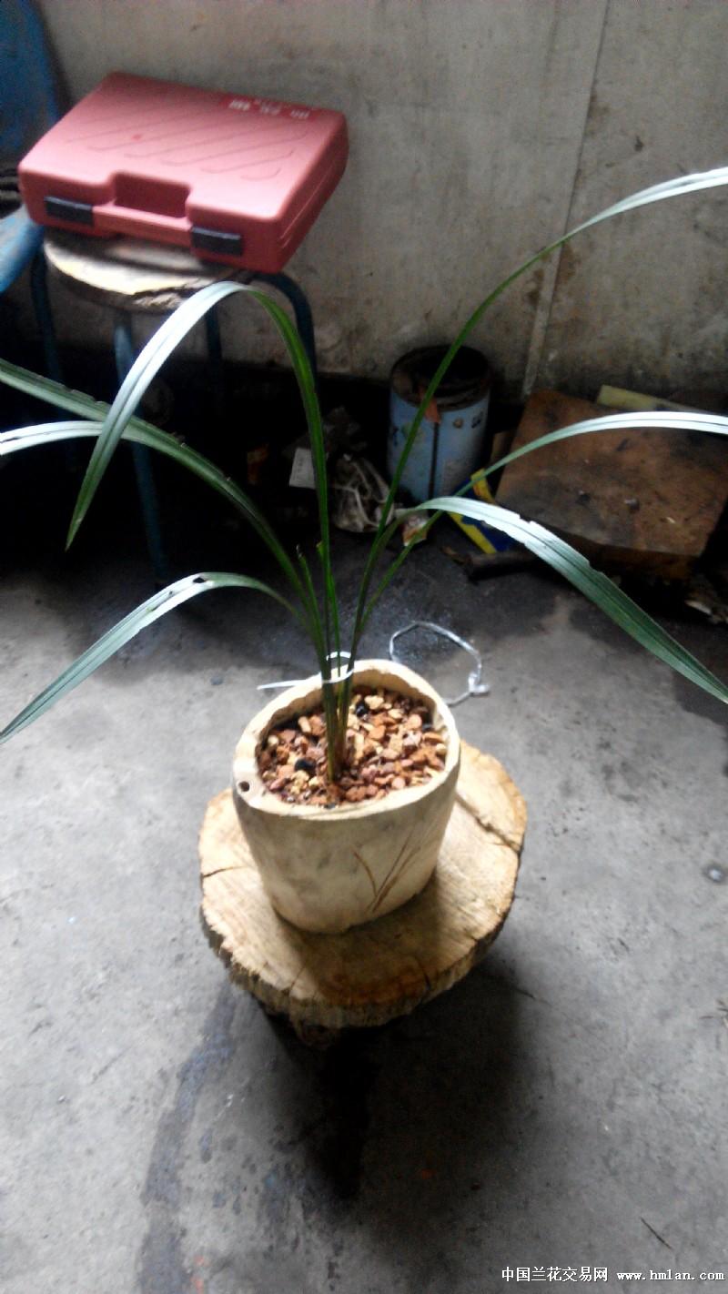 自己做的木头花盆